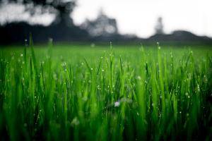 Lawn Sprinkler Services LaSalle